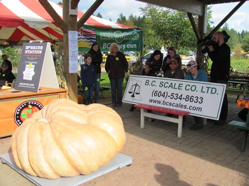 2013 Pumpkin Weigh Off at Alder Acres using B.C. Scale Co. Ltd. Floor Scale