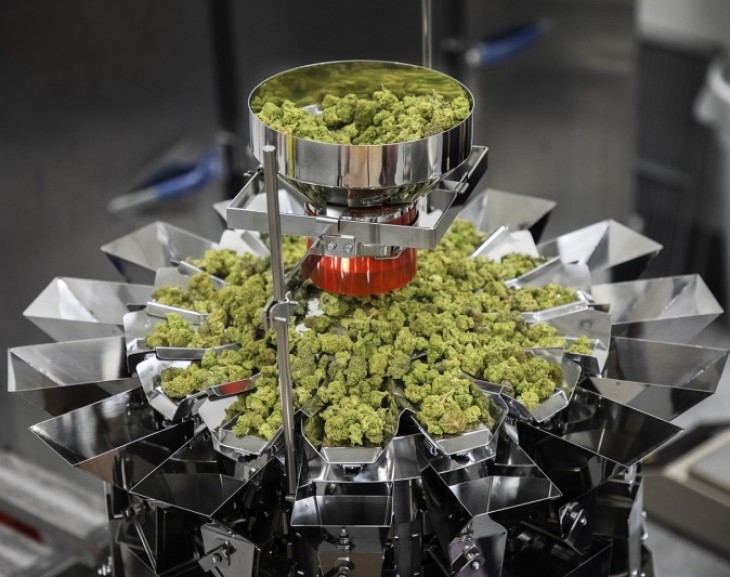 Specialist Weighers for Pharmaceutical Grade Cannabis